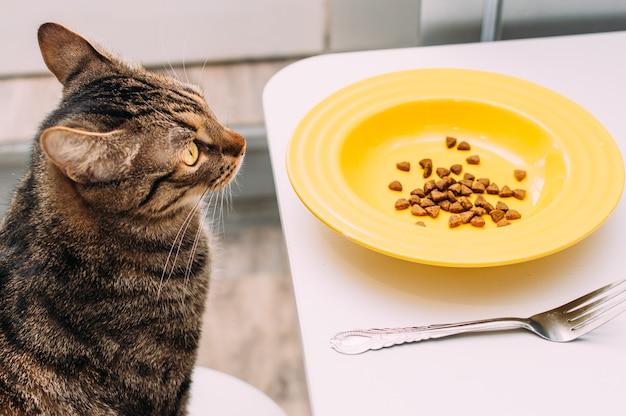 Cat sitzt mit teller und gabel auf einem stuhl am tisch.