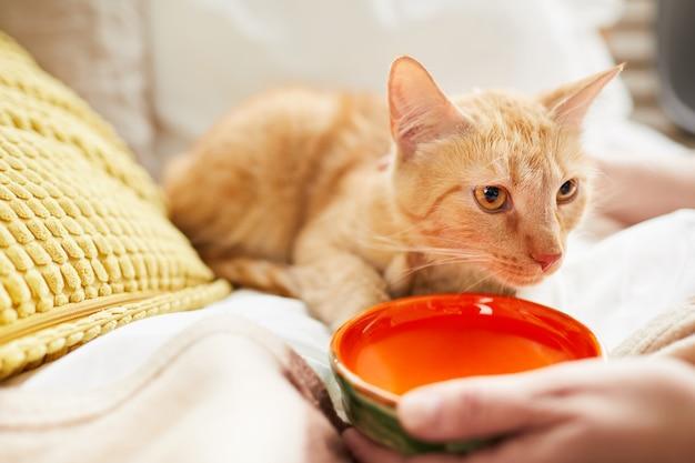 Cat wasser geben Premium Fotos