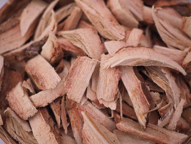 Catechubaum, cutch baum, cutch