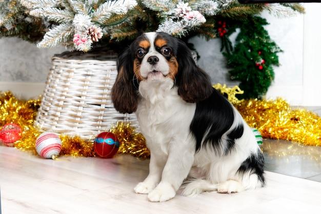 Cavalier king charles spaniel steht auf dem hintergrund des weihnachtsbaums.