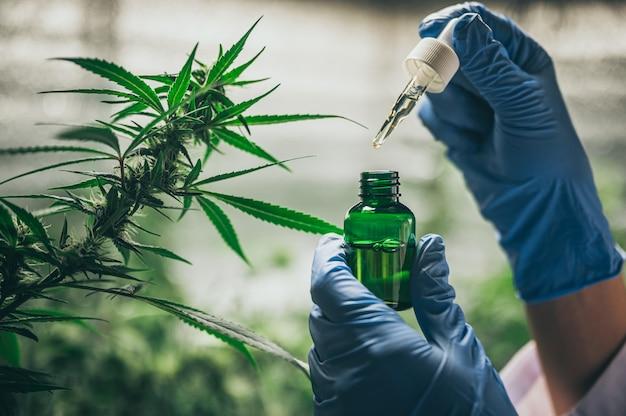 Cbd hanföl, hand hält flasche cannabisöl gegen marihuana pflanze. kräuterbehandlung, alternativmedizin
