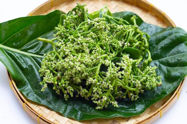 Ceylon-spinat-blume auf weißem hintergrund.