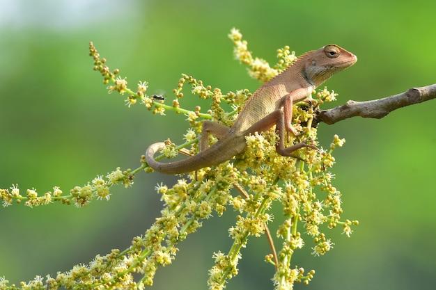 Chamäleons mit der natur