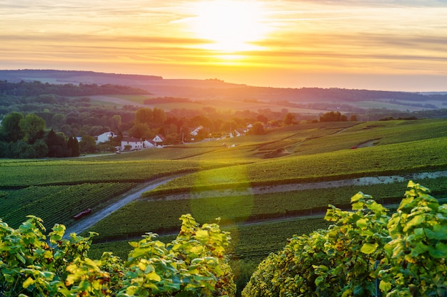 Champagne vineyards bei sonnenuntergang, montagne de reims, frankreich