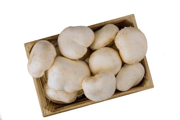 Champignon weiße pilze isoliert auf weißer oberfläche. draufsicht.