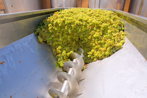 Chardonnay-korkenzieher-brecher in der weinbereitung