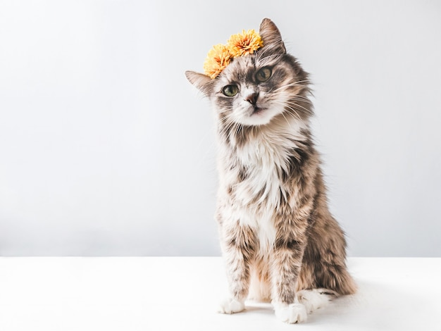 Charmantes, flauschiges kätzchen mit gelben blumen an einer weißen wand. isoliert, nahaufnahme