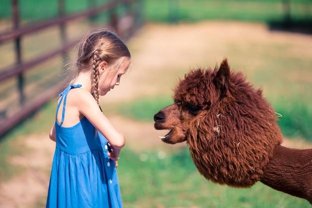 Charmantes kleines mädchen spielt mit süßem alpaka im park