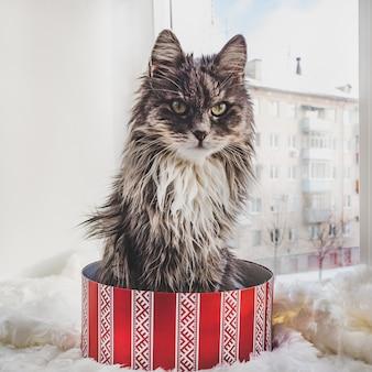 Charmantes, pelziges kätzchen und kisten mit geschenken
