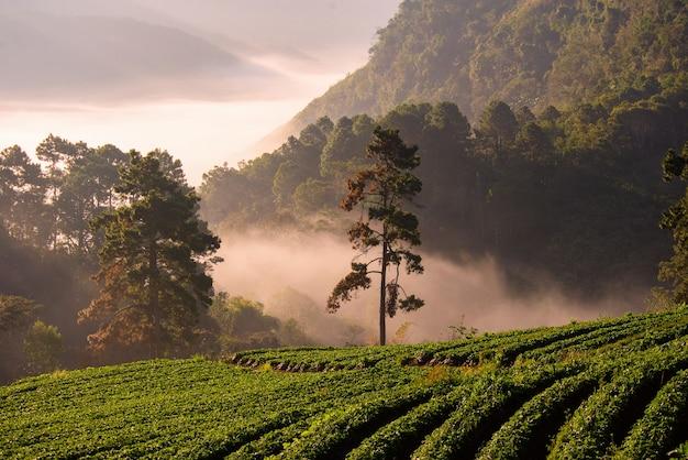 Chiang mai reise naturbilder foto schönes wahrzeichen der provinz,