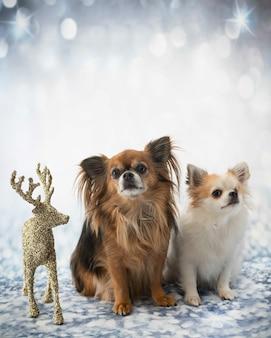 Chihuahua auf unscharfem hintergrund
