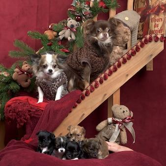 Chihuahua in jacke und welpen posieren, in weihnachtsschmuck