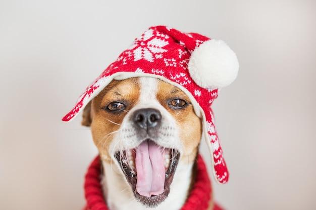 Chihuahua-porträt im weihnachtshut, der mit offenem mund lächelt