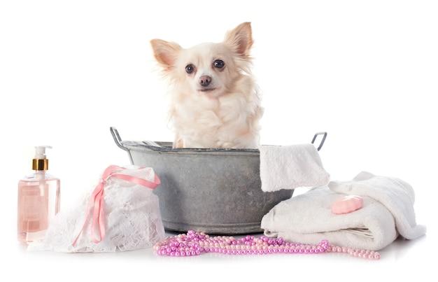Chihuahua waschen