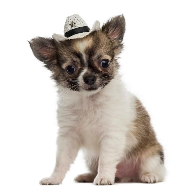 Chihuahua welpe, der einen cowboyhut trägt