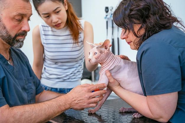 Chinesin besorgt über ihre verletzte sphynxkatze mit einer gebrochenen pfote.