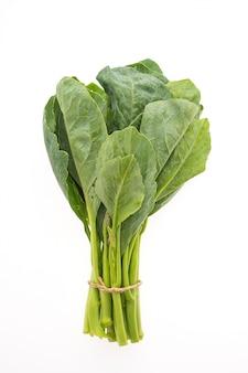 Chinesisches brokkoli gemüse