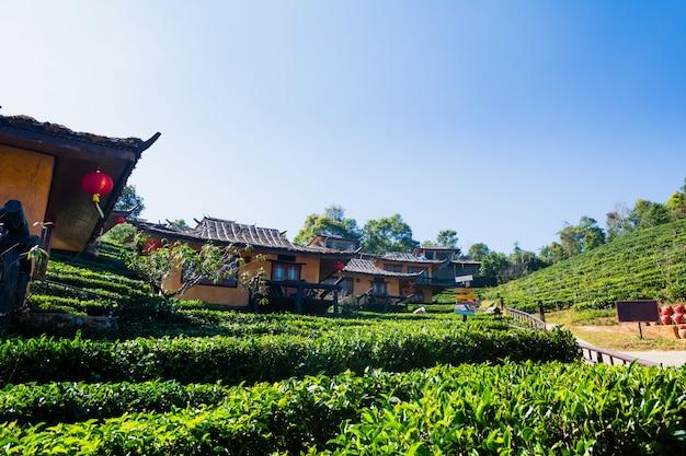 Chinesisches dorf der schönen landschaft unter teefeld, mae hong son in thailand