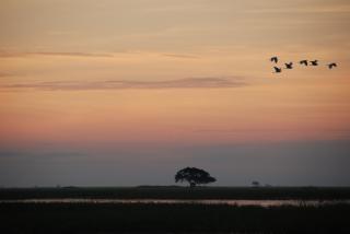 Chobe river sonnenuntergang