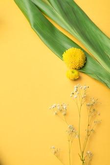 Chrysantheme und gemeine baby-atemblumen auf gelbem hintergrund