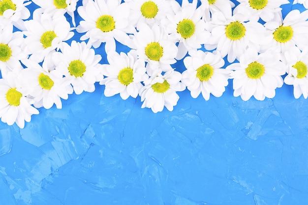 Chrysanthemen auf blauem hintergrund