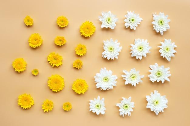 Chrysanthemenblume auf beiger oberfläche