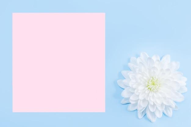 Chrysanthemenblume auf blauem hintergrund mit kopienraum.