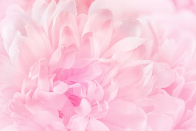 Chrysanthemenblumen in der weichen pastellfarbe und unschärfeart für hintergrund