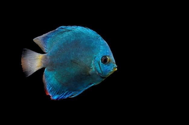 Ckose bis blauen fisch auf dunklem hintergrund