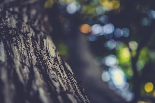 Close up baum rinde mit unscharf hintergrund