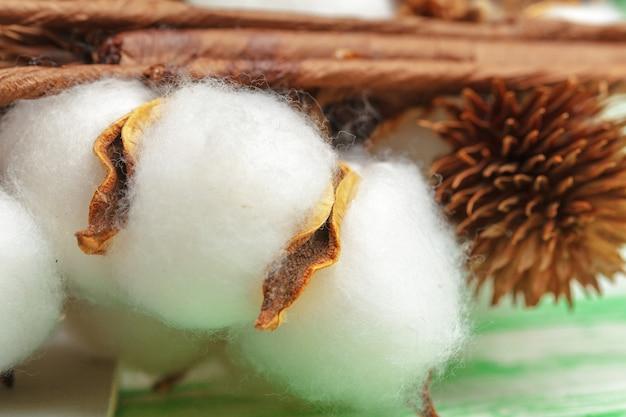 Close-up der reife baumwolle kapseln auf zweig