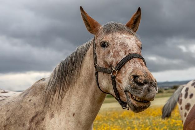 Close up portrait eines freien pferdes