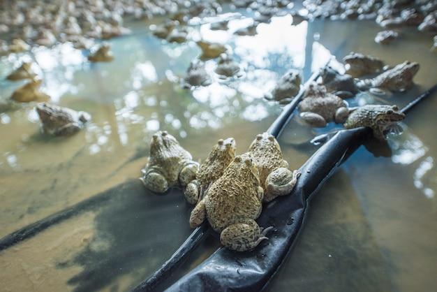 Close-up schuss von hinten frösche im pool
