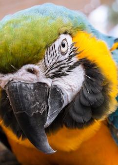 Close-up von aras mit gelben federn