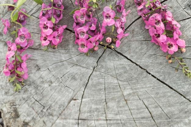 Close-up von stumpf mit lila blüten