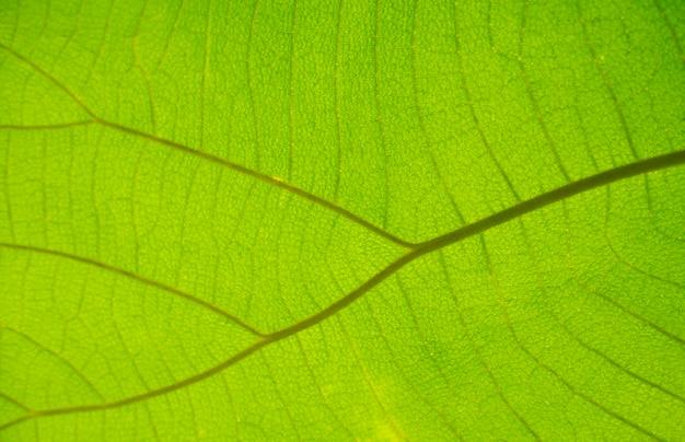 Closeup ecke blattmuster vintage hintergrund grüne blätter natur wählen sie einen bestimmten fokus