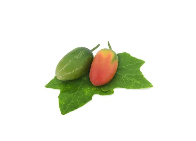 Coccinia grandis rohes grün isoliert auf weißer oberfläche