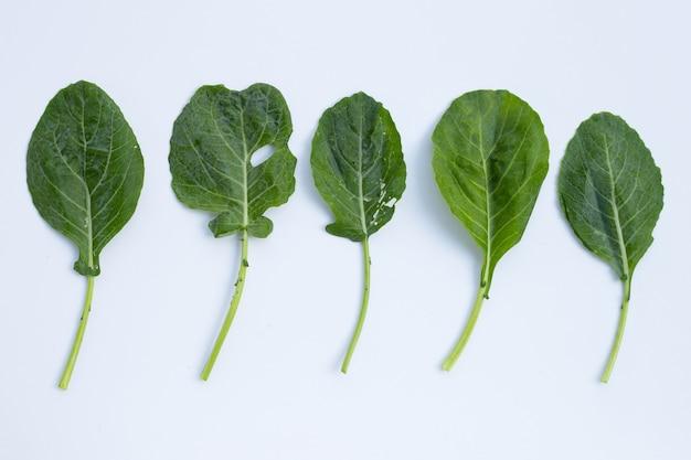 Collard grüne blätter mit löchern, von schädlingen gefressen. bio-gemüse