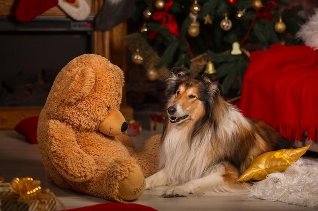 Colliehund, der neben einem großen teddybär auf dem boden liegt