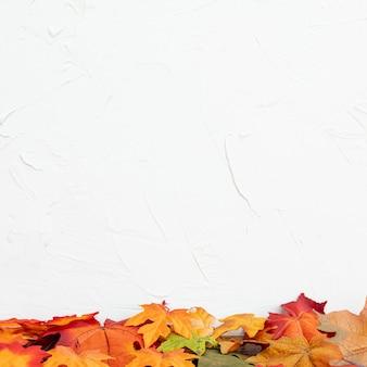 Colorul blätter mit weißem hintergrund