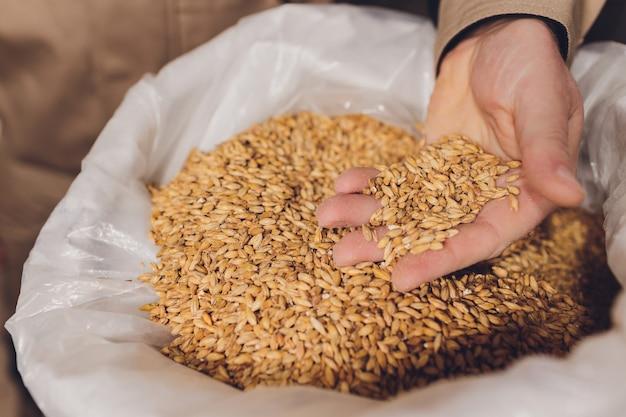 Colse oben von der hand eines landwirts, die sojabohnensamen hält. ein gesundes bio-produkt.