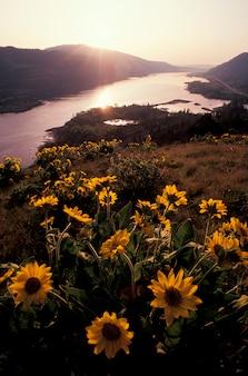 Columbia river schlucht, oregon