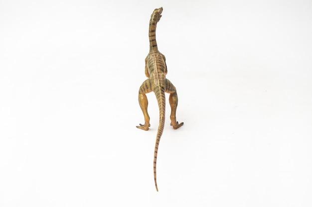 Compsognathus-dinosaurier auf weißem hintergrund