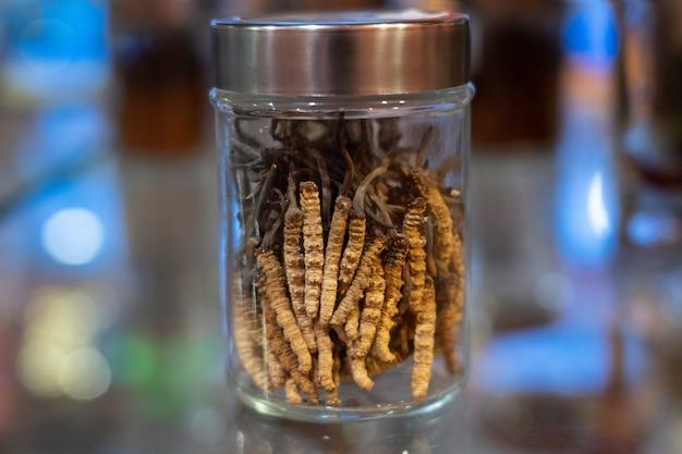 Cordyceps in einer glasflasche