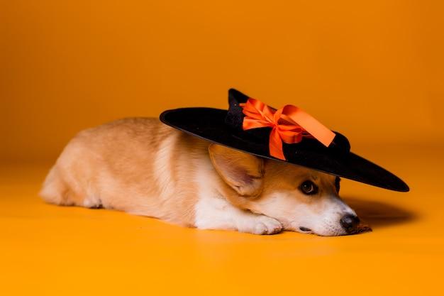 Corgihund im halloween-kostüm