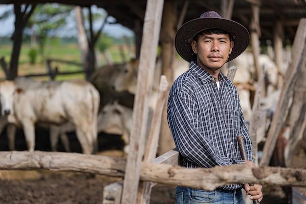 Cowman im kuhstall und seine kühe