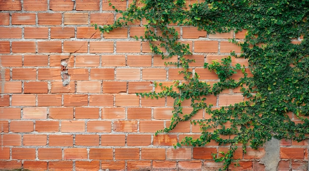 Creepers auf orange backsteinmauer hintergrund.