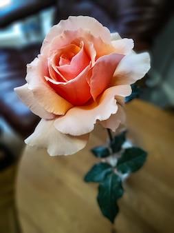 Creme rose in vase auf einem kleinen tisch drinnen