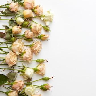 Cremige rosen, die einen weißen hintergrund mit copyspace umrahmen