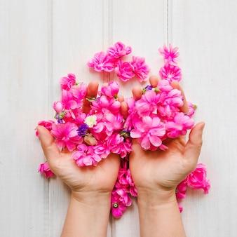 Crop hände mit rosa blüten